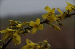 ... (Frühlings-)Erwachen (8)........