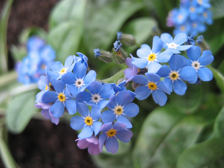 ~ Frühlings erwachen ~