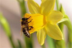 # Frühlings....    erwachen