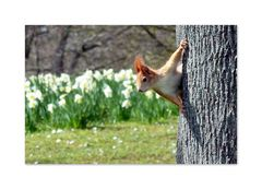 Frühlings Erwachen