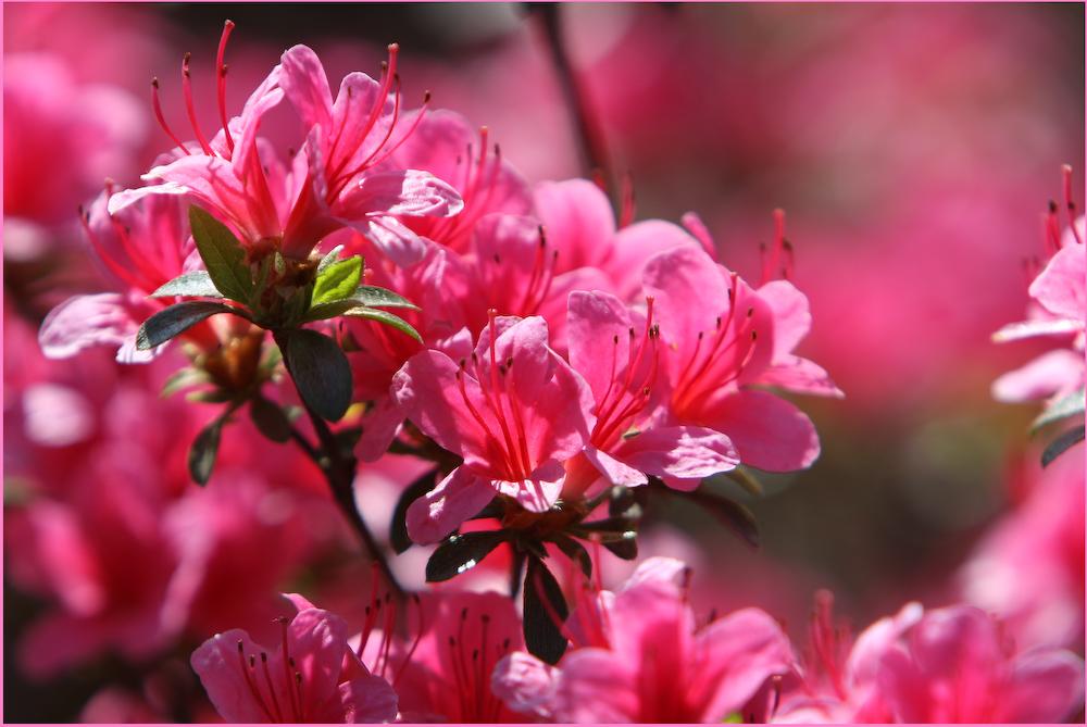 Frühlings Erwachen in Rot