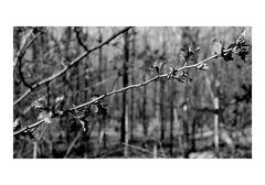 Frühlings Erwachen (unbunt)