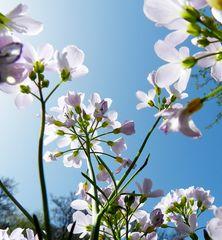 Frühlings..