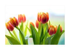Frühlings-FARBEN