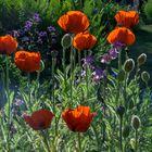 Frühlings Flower Power