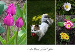 Frühlings- Freude
