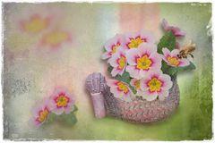 Frühlings-Gedanken....