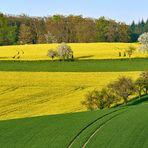 Frühlings-Hügel-Linien-Farbenrausch bei mir vor der Haustür, gestern Abend 19 Uhr aufgenommen...