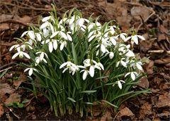 Frühlings - Läuten
