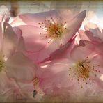 Frühlings-Melodie.....