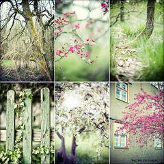 Frühlings-Sammlung 2012