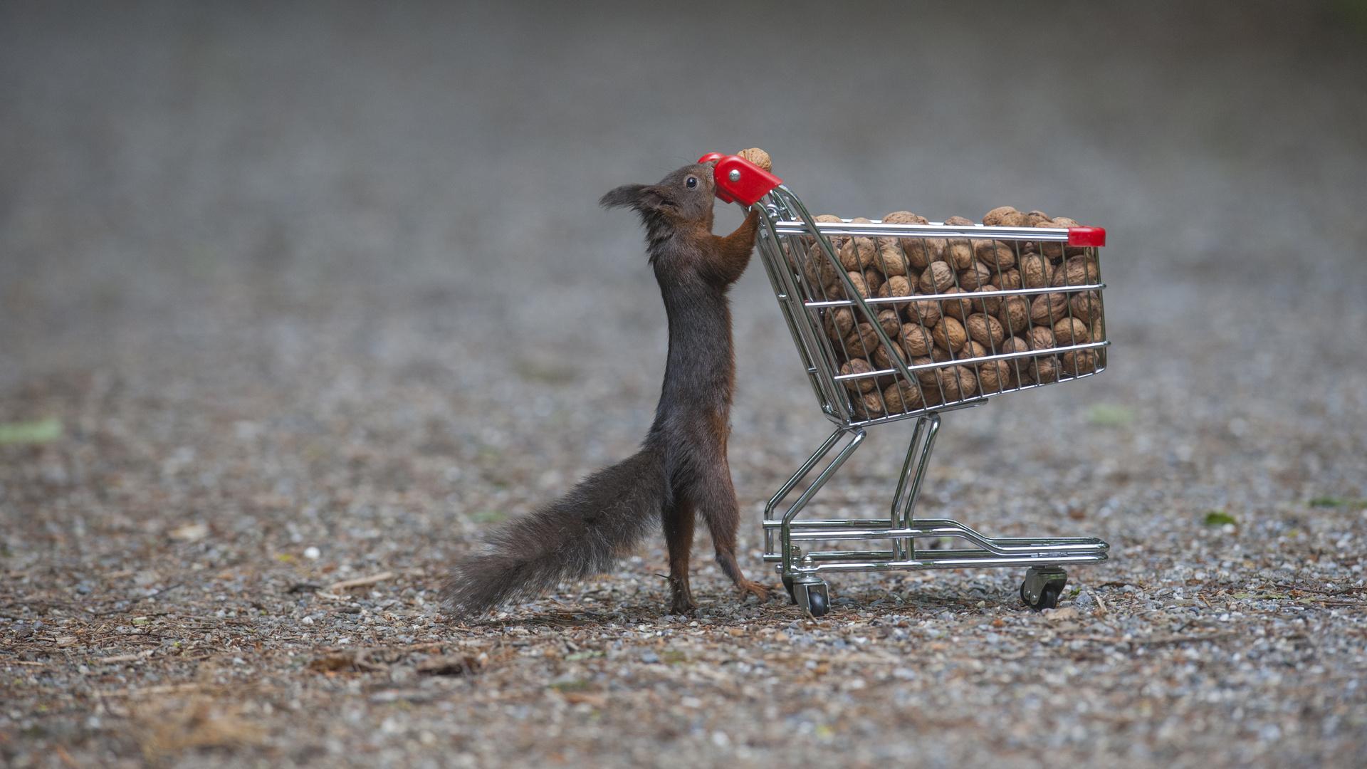 Frühlings Shoppingtour