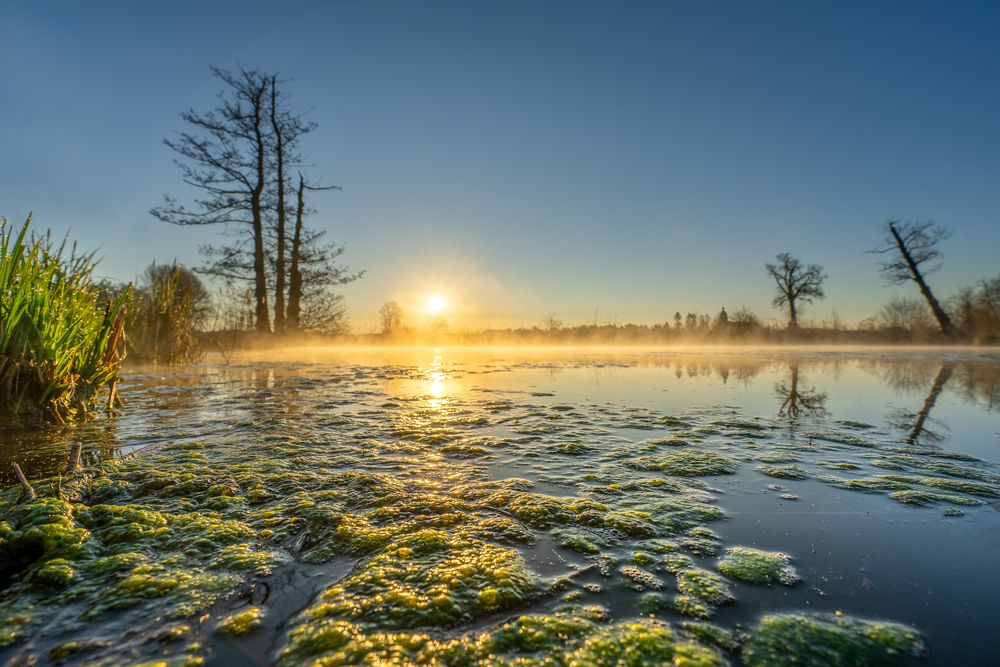 Frühlings-Sonnenaufgang