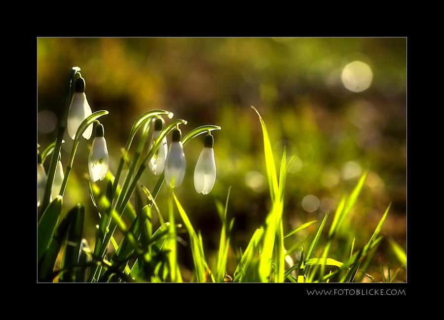 Frühlings Traum #2