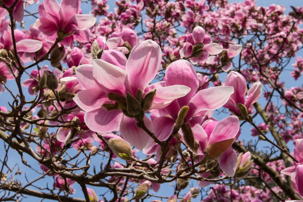 Frühlings-Traum