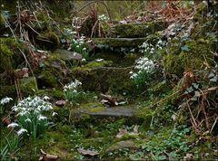 Frühlings Treppchen