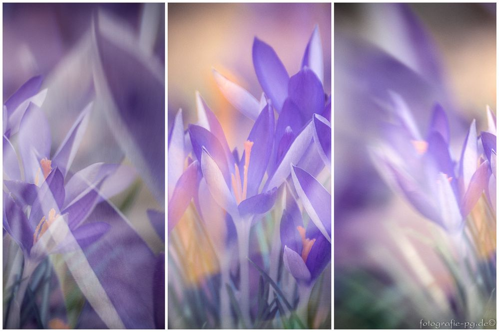 ... Frühlings-Triptychon ...