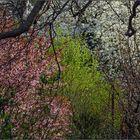 Frühlings-Urwald