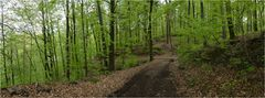 Frühlings-Wald-Weg
