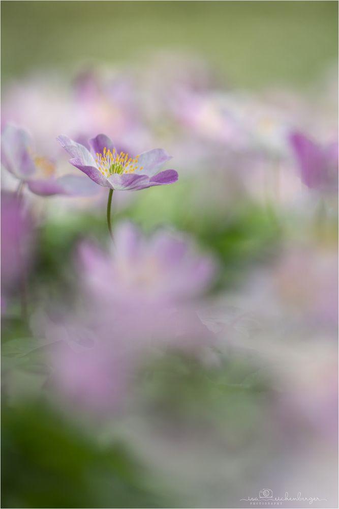 Frühlings-Waldzauber