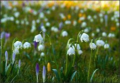Frühlings Wiese