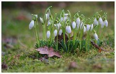 Frühlingsahnen