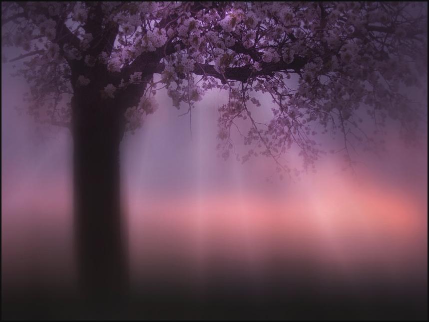 Frühlingsahnen3
