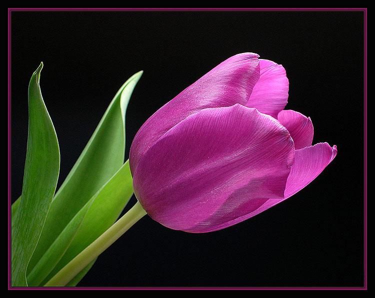 Frühlingsahnung