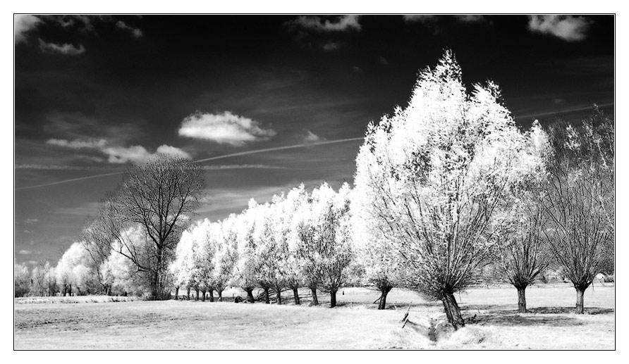 Frühlingsallee (IR)