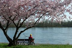 Frühlingsanfang am Eltviller Rheinufer