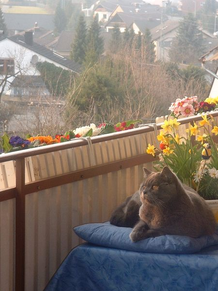 Frühlingsanfang auf dem Balkon