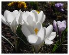 Frühlingsanfang!