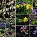 Frühlingsanfang im Garten