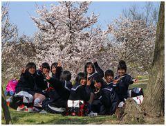 Frühlingsanfang in Japan