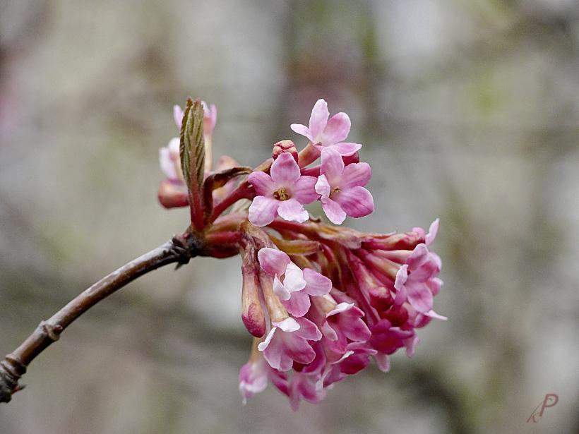 Frühlingsanzeichen ...