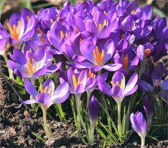 Frühlingsaufmarsch