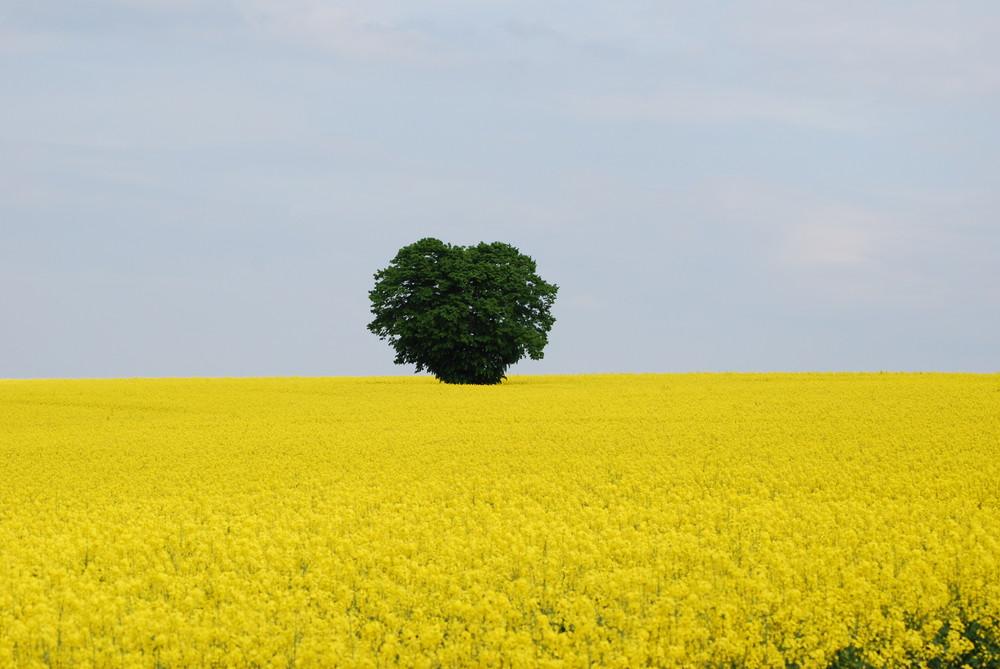 Frühlingsbäume