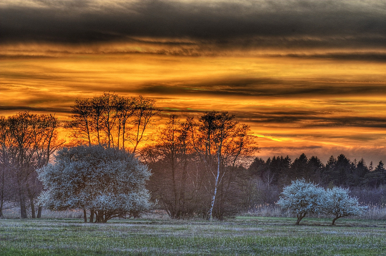 Frühlingsbäume  Sonneuntergang