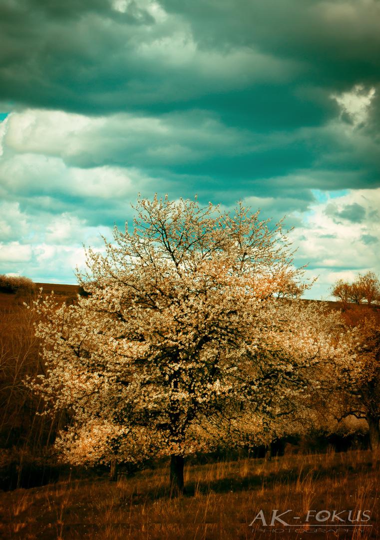 Frühlingsbaum