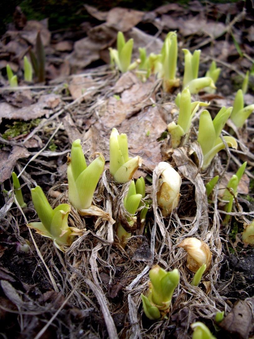 Frühlingsbeginn 2