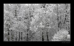 Frühlingsbeginn 2007 [2]