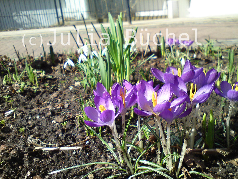 Frühlingsbeginn :D