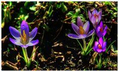 Frühlingsbeginn?