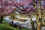 Frühlingsbeginn im Botanischen Garten, München