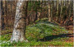 Frühlingsbeginn im Wald