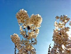 ... Frühlingsbesuch ...