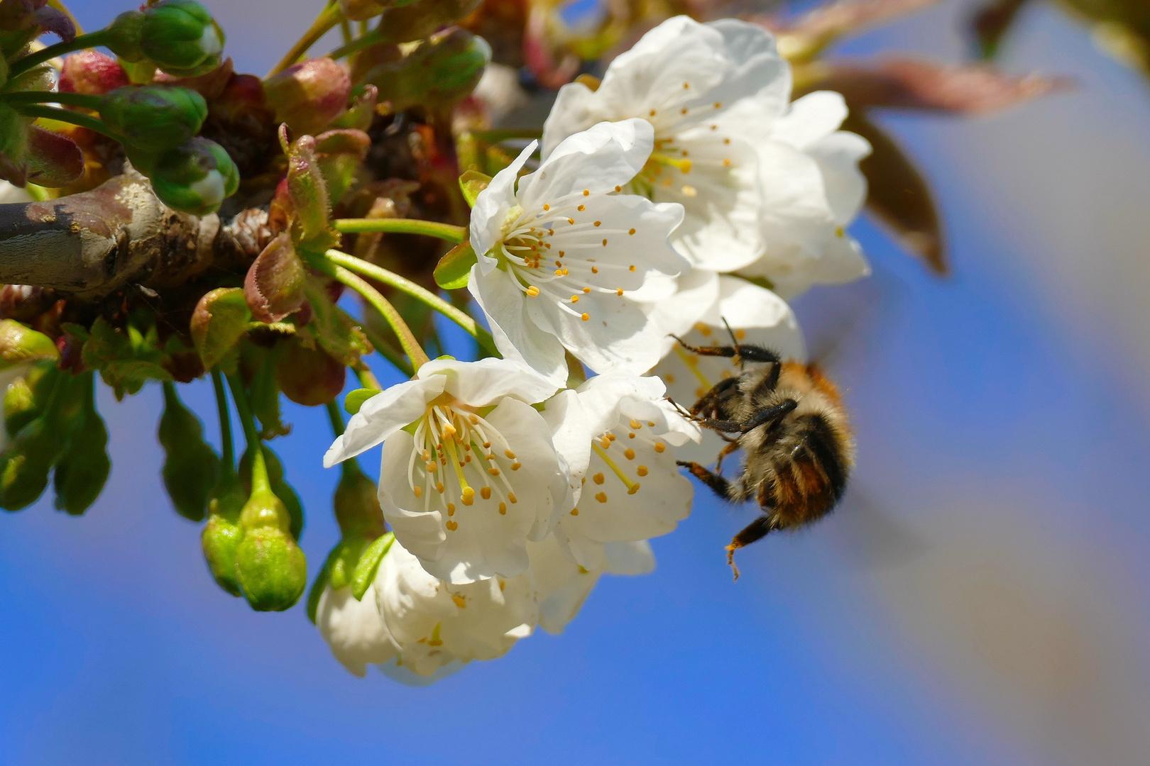 Frühlingsbild Foto & Bild | jahreszeiten, frühling, tiere und natur ...
