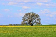 Frühlingsbild II.