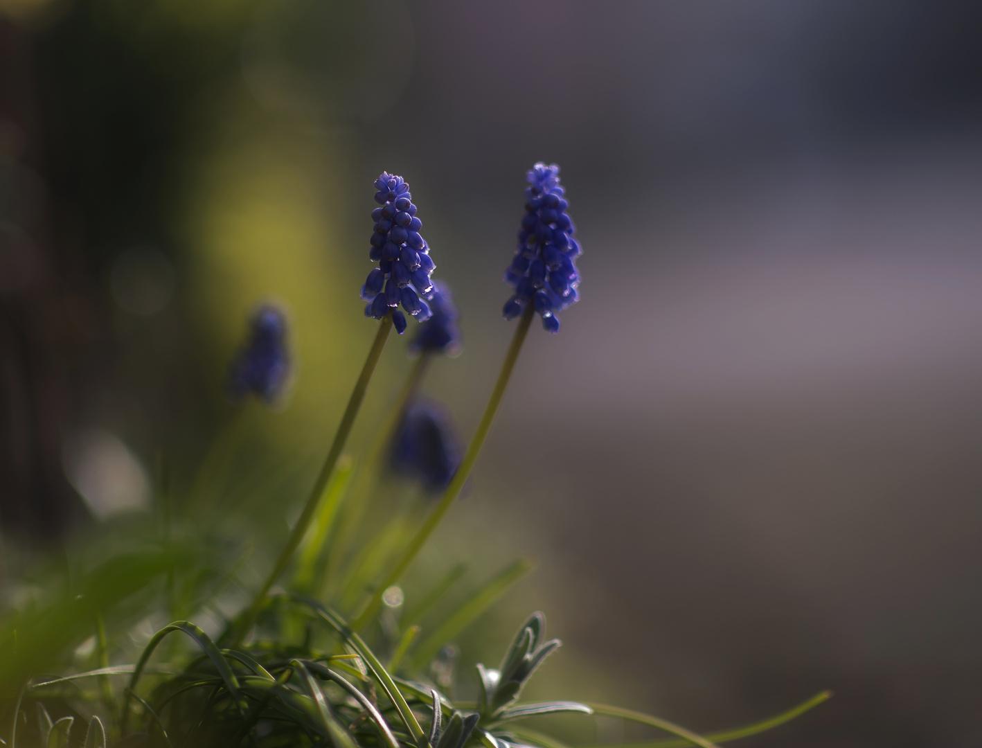 Frühlingsblau...