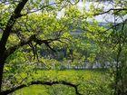 Frühlingsblick auf die Saale